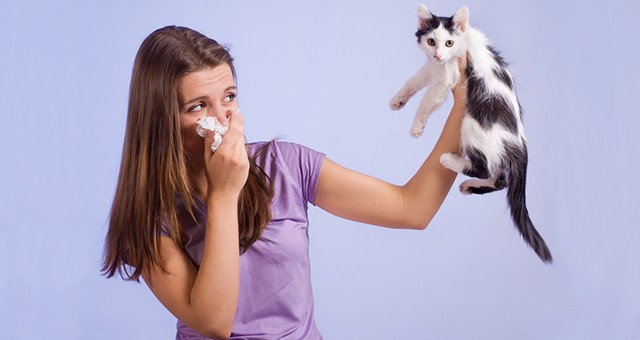 Cat Allergies: What`s Fluff an...
