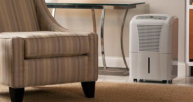 Dehumidifiers: Frequently Asked Questions | Sylvane