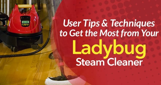 Ladybug Steam Cleaning Tips Techniques